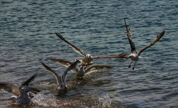 Action on seabirds by-catch