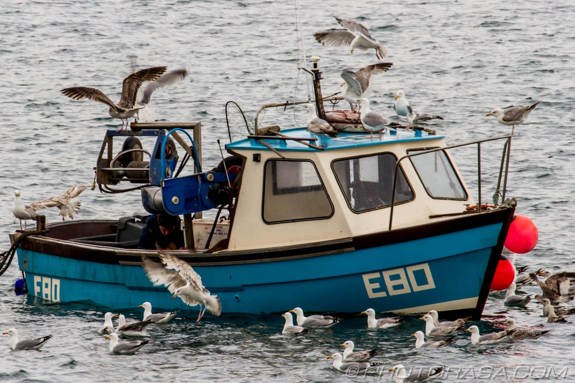 seagulls swarming over returned fishing boat