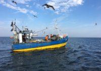 Baltic cod